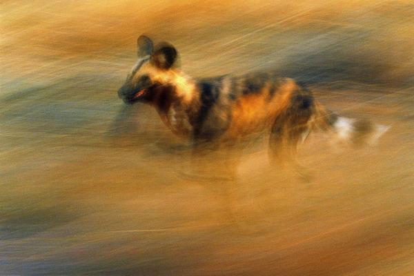 凶猛动物图片-动物图 闪电