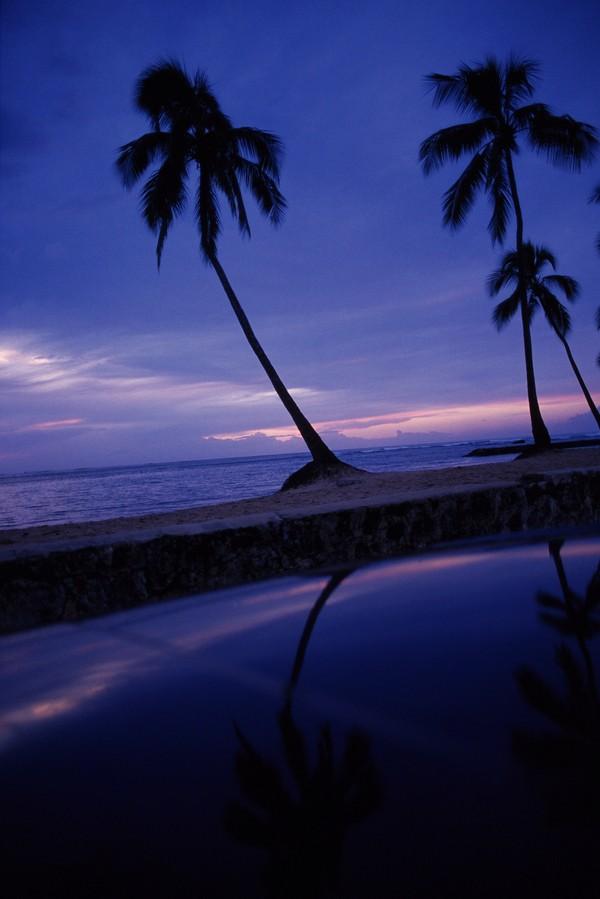 椰树 海面 倒影 海滩-风景-风景,海滩