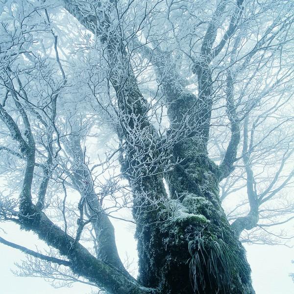 树枝 大树 高耸 树干 仰视 冬天雪景-风景-风景,冬天雪景