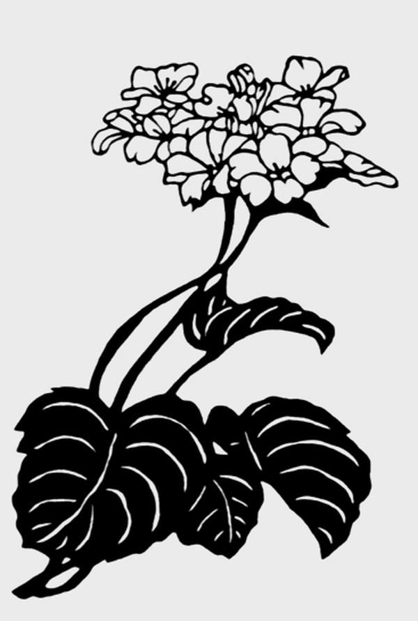 中国民间艺术-植物图案花纹 黑白花纹 植物类 浓墨树叶