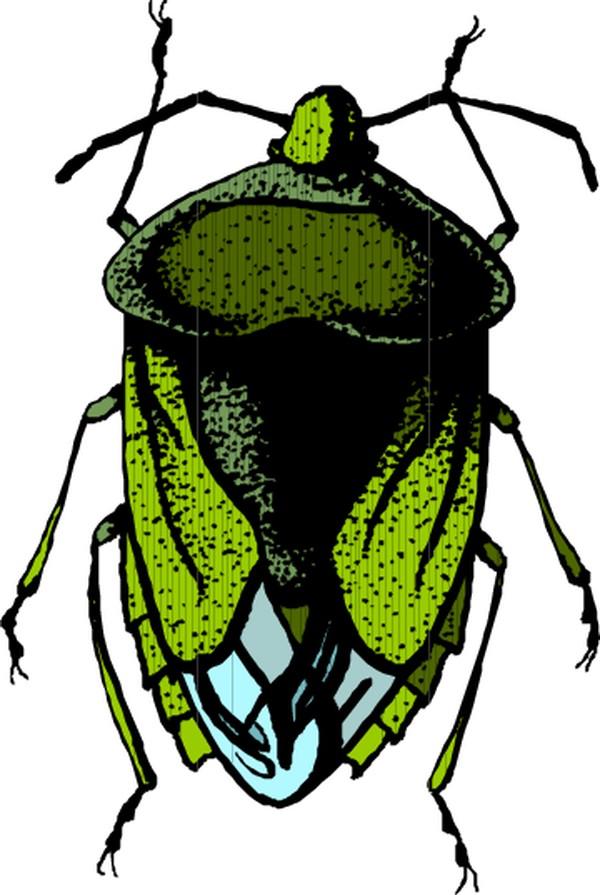 昆虫蝴蝶-动物-动物,昆虫蝴蝶类