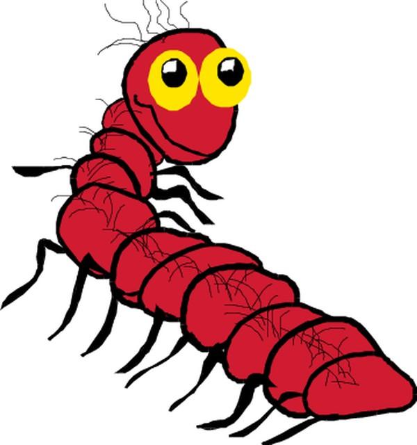 昆虫蝴蝶图片-动物图,动物