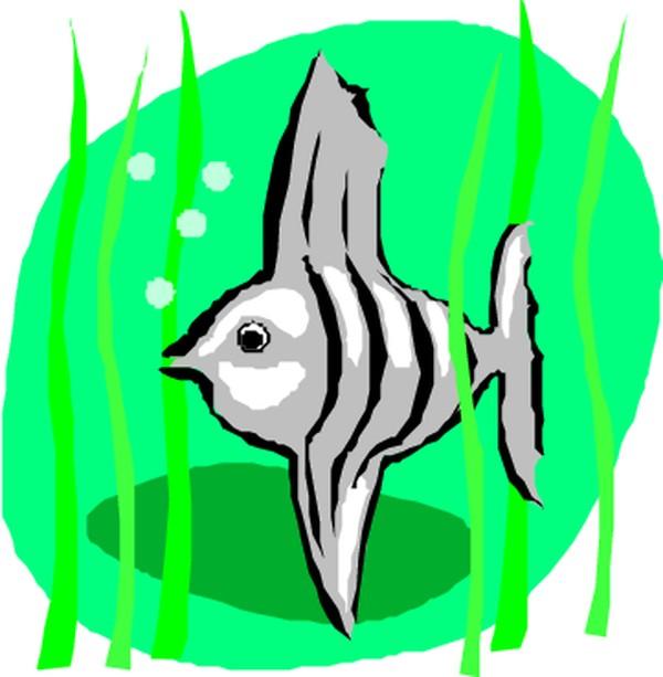 海洋动物图片-动物图,动物
