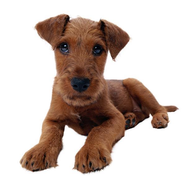 宠物之狗图片-动物图 宠物