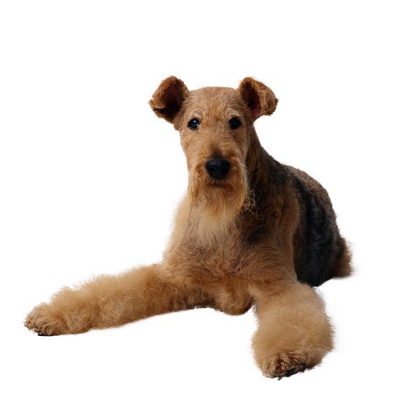 宠物之狗图片-动物图 棕色