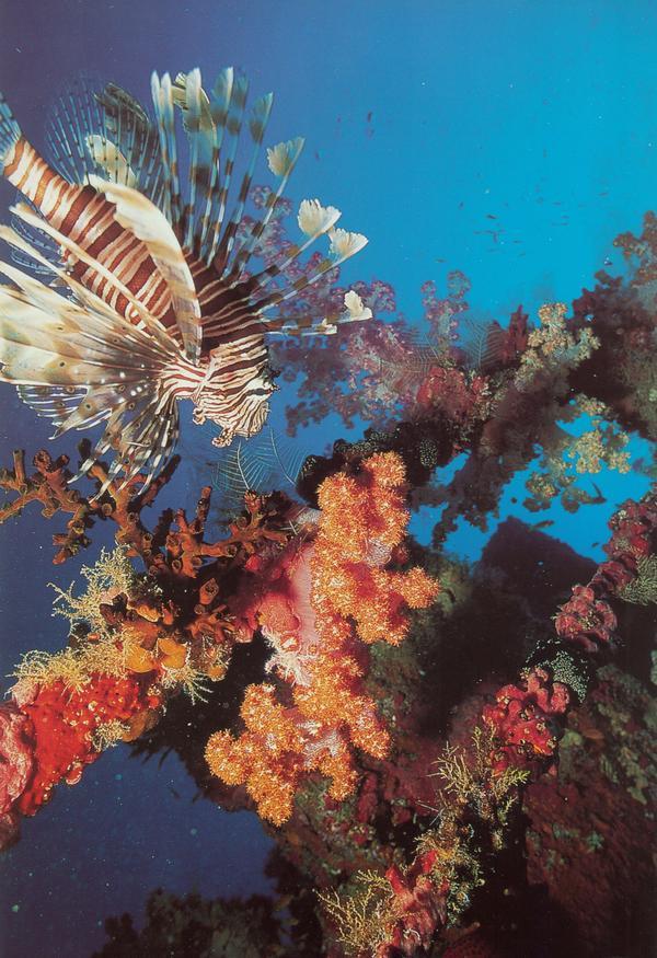 海底世界图片-动物图 海藻