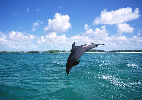 动物-鲸鱼鲨鱼海豚 大海 蓝天 白云