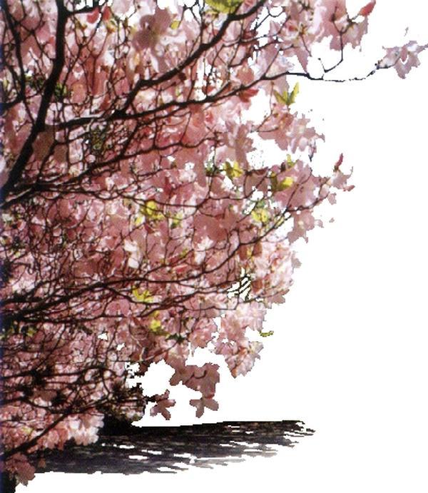 自然风景-近景树