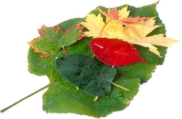 红色 黄色 绿色 茂盛叶子-自然风景-自然风景,茂盛叶子