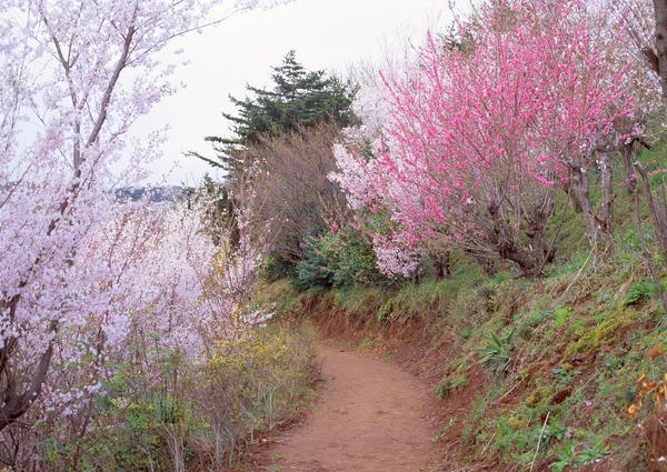 小道 路边花草 桃花树 春暖花开-自然风景-自然风景,春暖花开