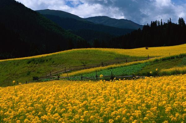 山丘旁 黄色花地 围栏 田园风光-自然风景-自然风景,田园风光