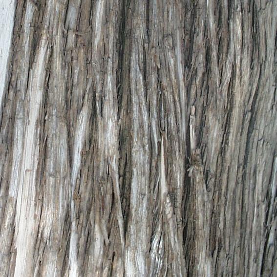 树皮图片-木材图,木材