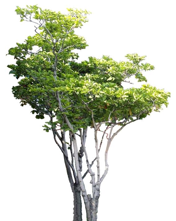 室外植物-植物-植物,室外植物