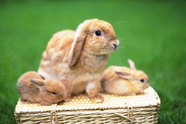 可爱小动物-动物