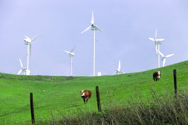 风车 荷兰 牧场 环保措施-工业-工业,环保措施