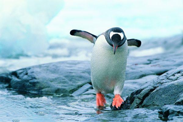 企鹅世界-动物-饮食水果,企鹅世界