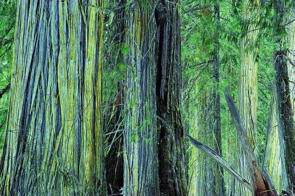 森林树木图片-自然风景图