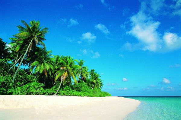 自然风景-沙滩大海 海滩 椰子树 倾斜 热带 局部