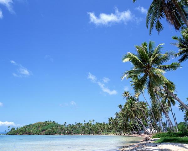 海南 分光 椰子林 沙滩大海-自然风景-自然风景,沙滩大海