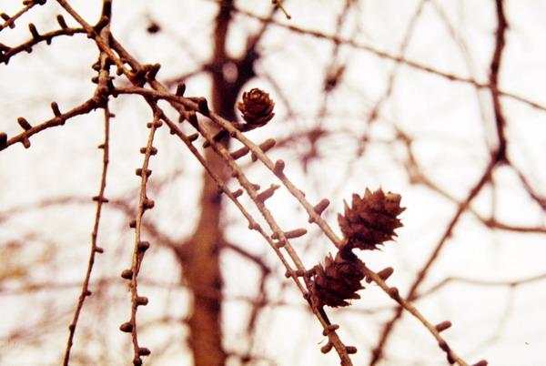 风情图片 自然风景图 果子 秋天 种子,自然风景,四季风情