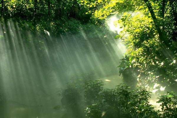 林间 小溪 阳光 自然世界-自然风景-自然风景,自然世界