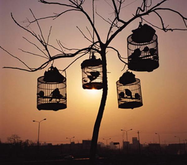 (原创)丁香丛中的鸟笼 - 桑梓哥哥 - 桑梓哥哥的草根世界