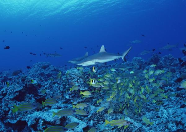 海底世界 鱼群 珊瑚 水底天堂-动物-动物,水底天堂