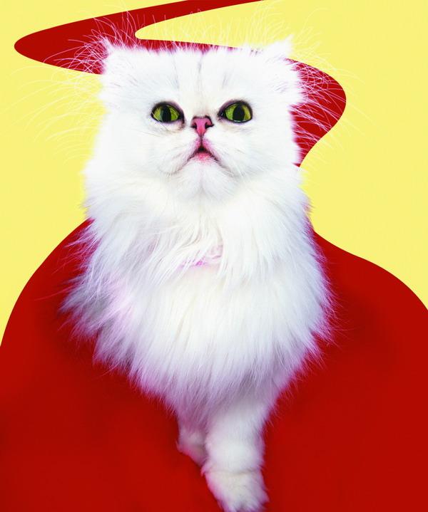 可爱之猫图片-动物图 红丝带