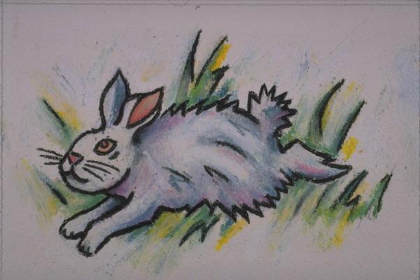 撵兔子 - 深深的海洋 - ping0006的博客