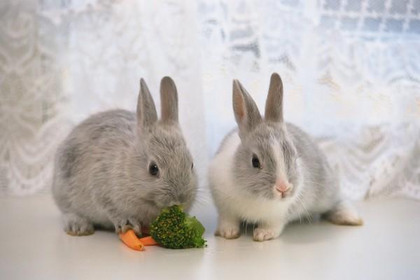小兔子 青菜 胡萝卜 可爱小动物-动物-动物,可爱小动物
