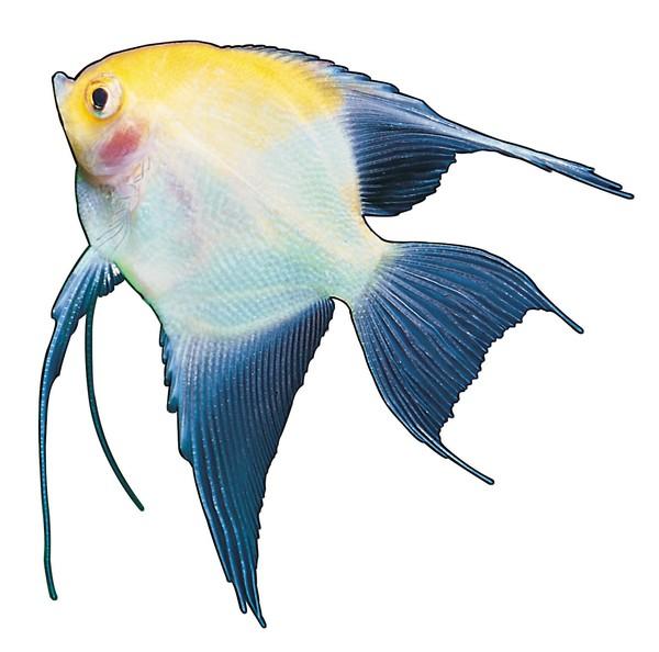 多彩鱼类图片-动物图 鱼尾
