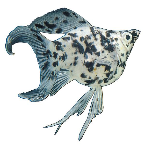 多彩鱼类图片-动物图,动物