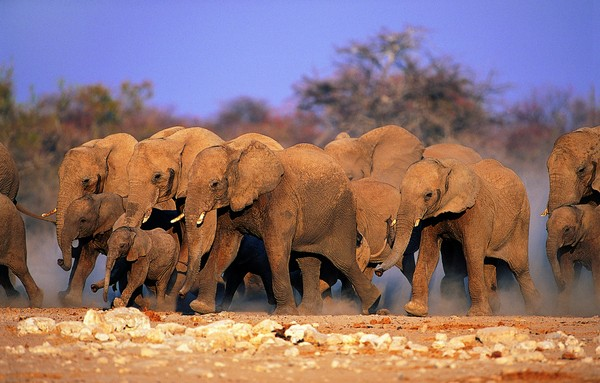 动物简笔画:带笑脸的大象 - 简笔画大全 - 天天学