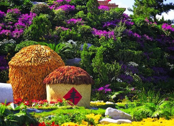 玉米 丰收 公园风景-风景-风景