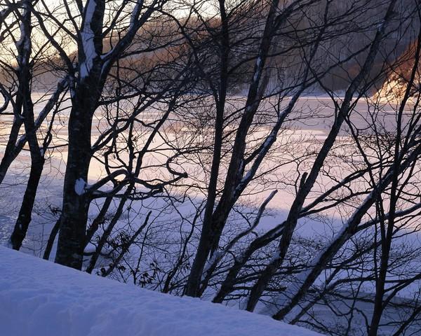 风景-冬天雪景 树林一角 枯枝 淡淡阳光