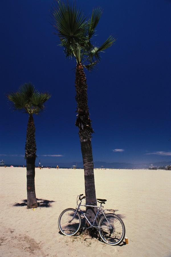沙滩 芭蕉树 自行车 海滩-风景-风景,海滩