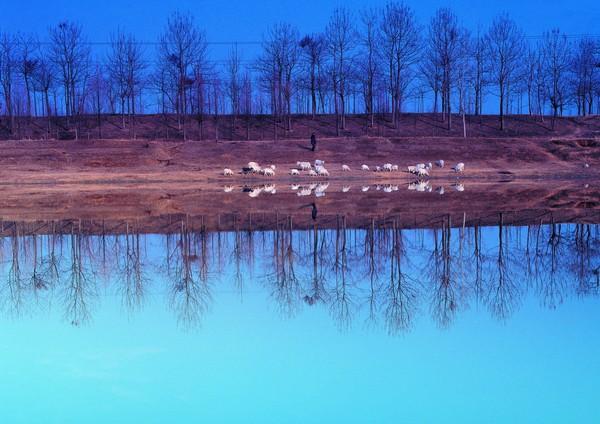 风景-自然风光 对称 倒影 岸边 鸭群 奔跑