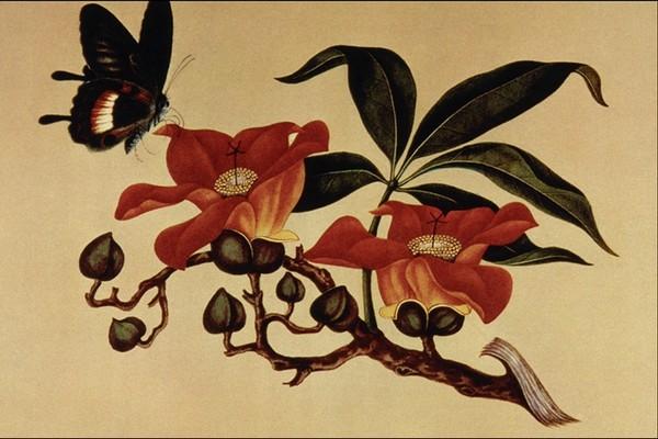 日本手绘小清新蝴蝶
