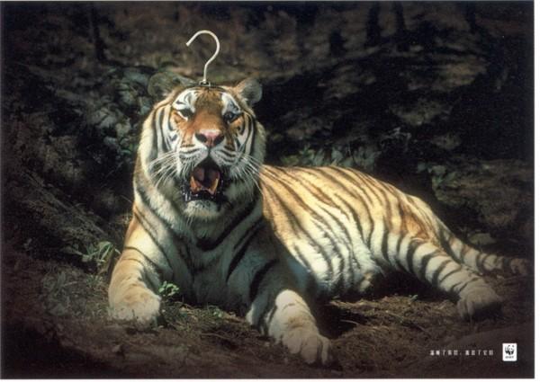 老虎 正面 趴着 公益-中国广告作品年鉴2006-中国广告作品年鉴2006