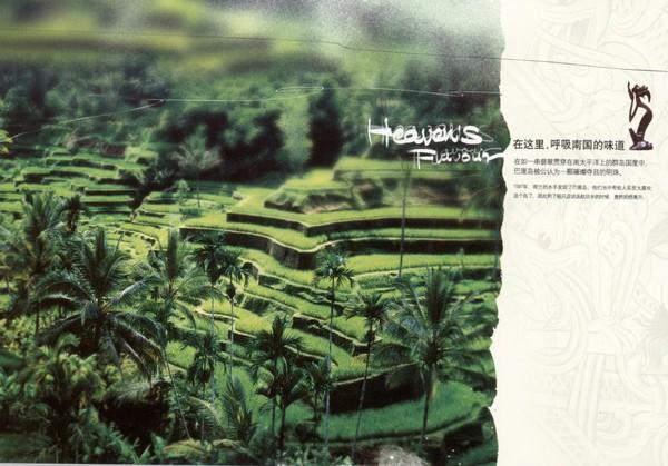 森林 葱绿 梯田 风景画图片