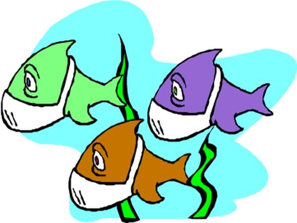 水中动物-动物-动物,水中动物