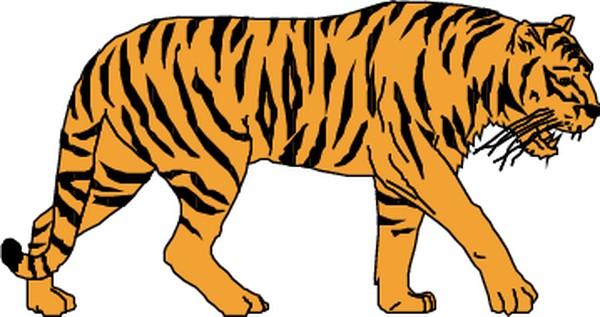 常见动物-动物-动物,常见动物