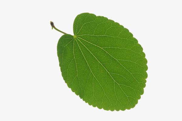 树叶 自然 茂盛叶子-自然风景-自然风景