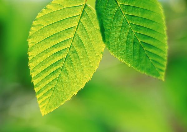 茂盛叶子图片-自然风景图
