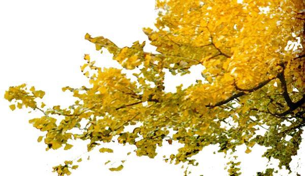 树枝 近景树-自然风景-自然风景
