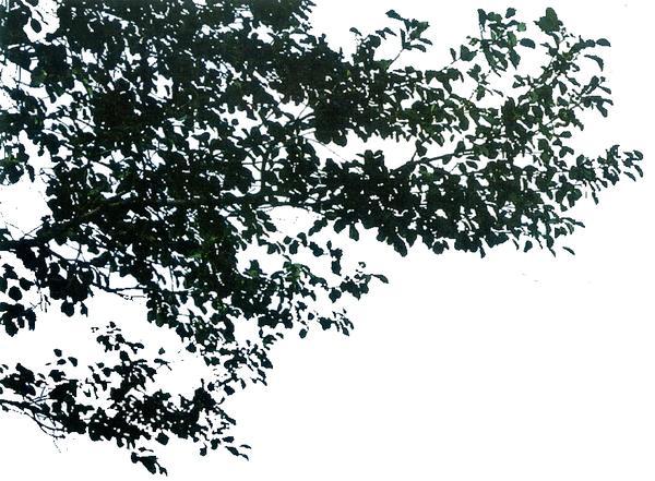 近景树图片-自然风景图 绿色植物,自然风景,近景树