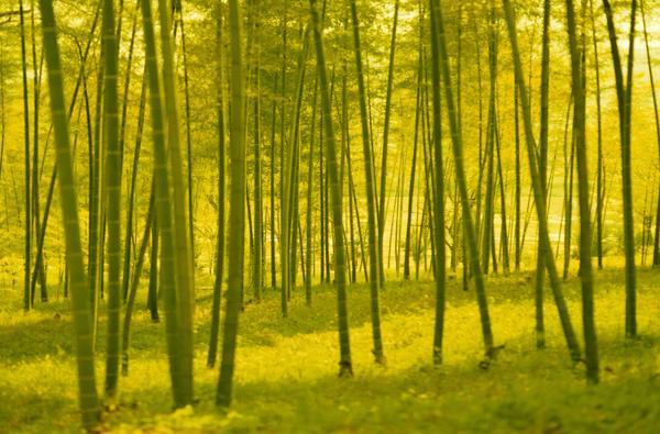 丛林之美图片-自然风景图 竹子 竹林 竹叶,自然风景