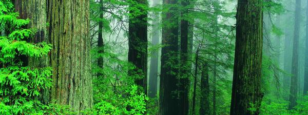 大自然 古木 粗大树干 丛林之美-自然风景-自然风景,丛林之美
