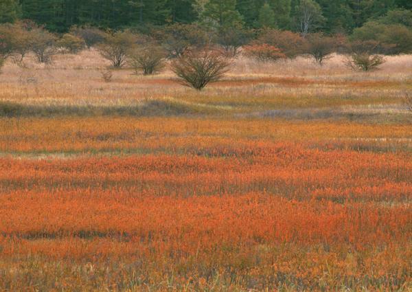 之美图片 自然风景图 秋天 田野 丰收,自然风景,丛林之美