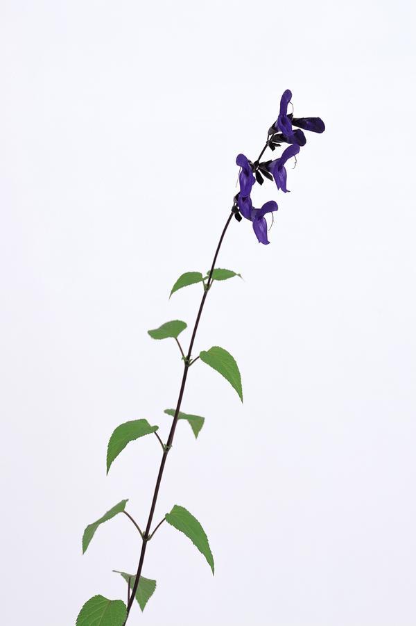 花卉艺术图片-自然风景图